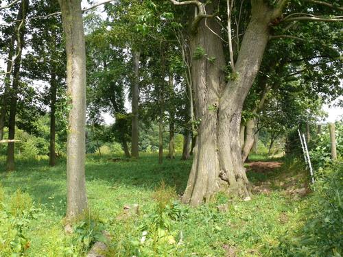 Voeren, Altenbroek 4, boomgroep park