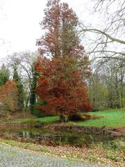 Moerascipres Osbroekpark