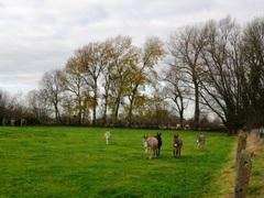 Bomenrij van opgaande abelen, zwarte en Canadapopulieren