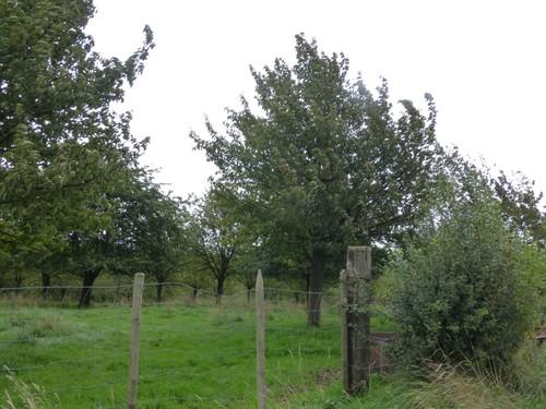 Heers, Heks, Kersenboomgaard met meidoornhaag
