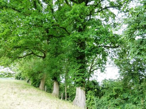 Voeren Sint-Pieters-Voeren Commanderieshof Houtkant op talud holle weg (1)