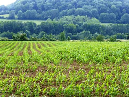 Voeren, Veurs, veekeringshagen van meidoorn en houtkant op talud