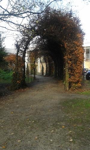 Wevelgem Vanackerestraat Kasteelpark berceau (2)