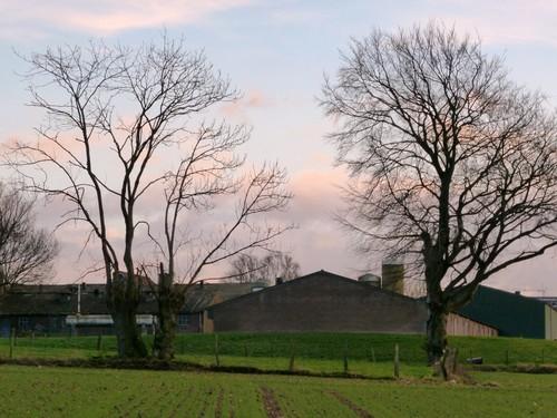 Voeren, Schilberg, bomenrij van es