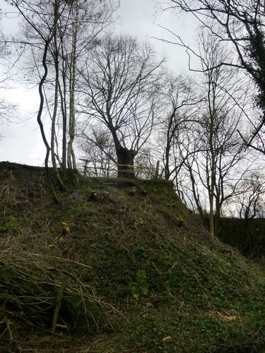 , Borgloon, Bommershoven, Romeinse Kassei, Puesboom op hoogte.