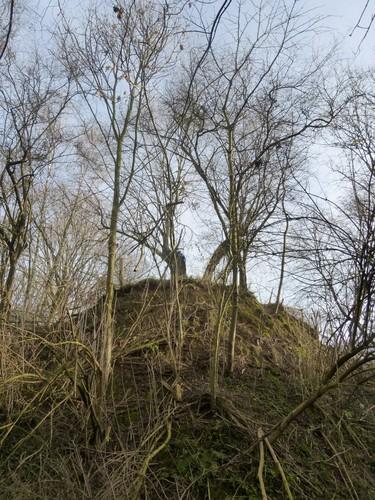 Borgloon, Bommershoven, Romeinse Kassei, Puesboom op hoogte.
