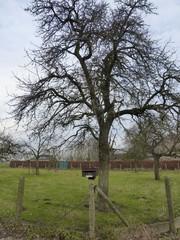 Hoog- en halfstamboomgaard