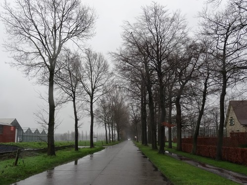 Aalter Mariahovelaan straatbeeld