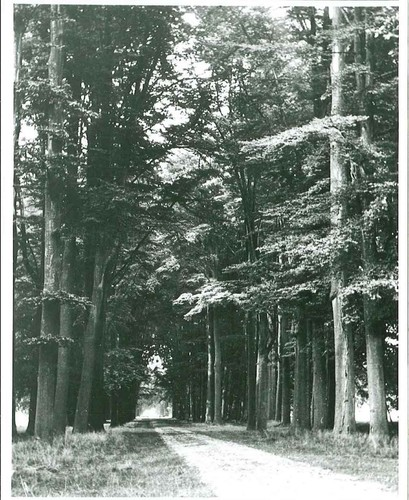 Schilde Sint Jobsteenweg Kasteeldomein (3)
