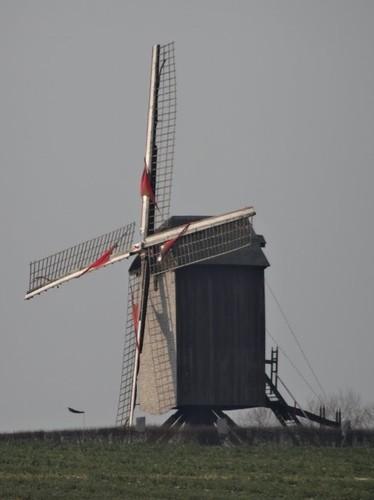 Oudenaarde Buchtweg zonder nummer Windmolen Tissenhovemolen
