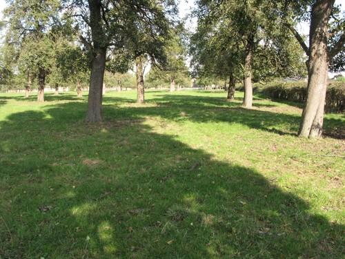 Oplinter Weideboomgaard