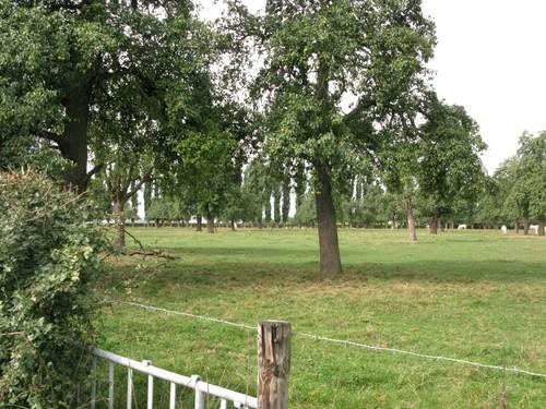 De weideboomgaard wordt nog steeds begraasd