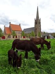 Kerkdorp Nieuw-Stuivekenskerke