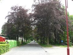 Kasteeldreef met drie bomenrijen