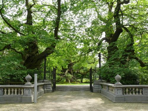 Lovendegem Vinderhoute drie oude tamme kastanjes  kasteel schouwbroek (8)