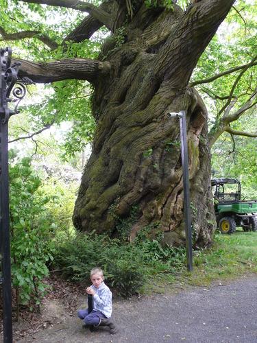 Lovendegem Vinderhoute drie oude tamme kastanjes  kasteel schouwbroek (9)