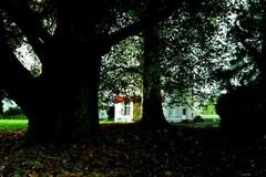 De dikste en oudste bomen bij het kasteel van Rukkelingen: platanen en links op de voorgrond een zuilvormige zomereik aan de rand van de Primitieve 'lusthof'. (https://id.erfgoed.net/afbeeldingen/242525)