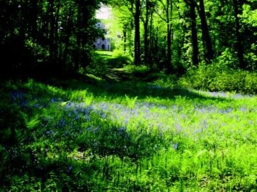 De vijver op het plan van Galoppin omvatte ook deze vegetatie met wilde hyacint, later op het jaar reuzenpaardenstaart.
