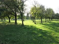 Hoogstamboomgaard met hek