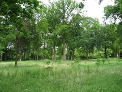 Boomweide met opgaande zomereiken in Kasteelpark Gruuthuse