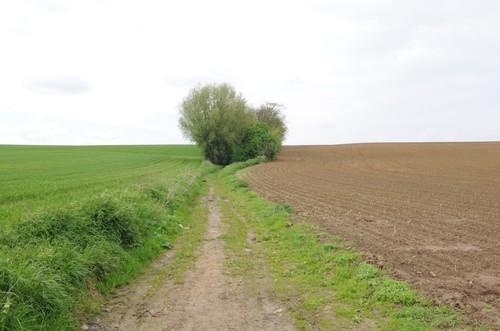 Zicht op de holle weg Longa, Landen, Tienen (6).