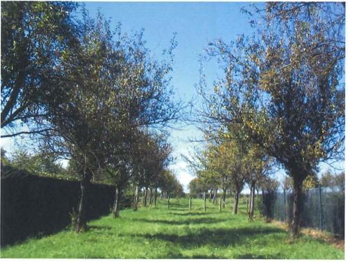 Diepenbeek Hoogstamboomgaard (3)