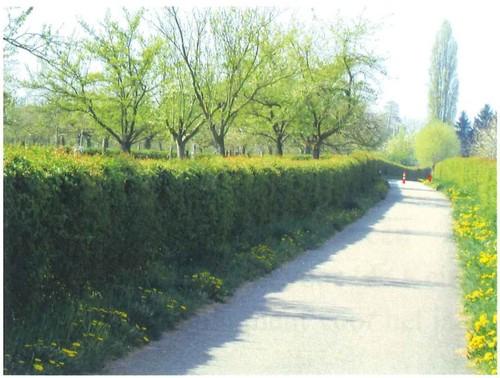 Diepenbeek Hoogstamboomgaard (2)