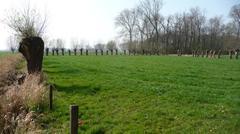 Prehistorisch sitecomplex in alluviale context van de depressie van de Moervaart