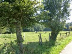 Hayesbos en Verrebeekvallei