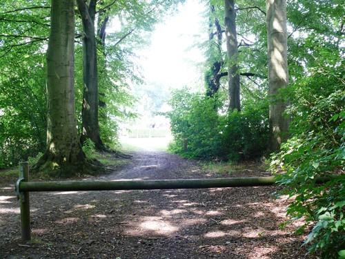 Kruishoutem Lozer Beukendreef met opgaande bomen (3)