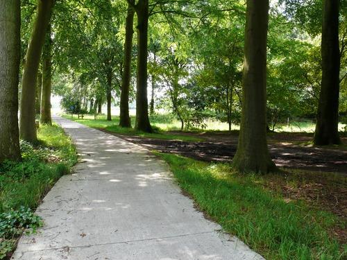 Kruishoutem Lozer Kasteelstraat dubbele beukendreef  (6)