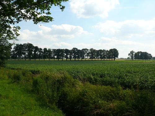 Kruishouten Akkerstraat enkele dreef met opgaande eiken (1)