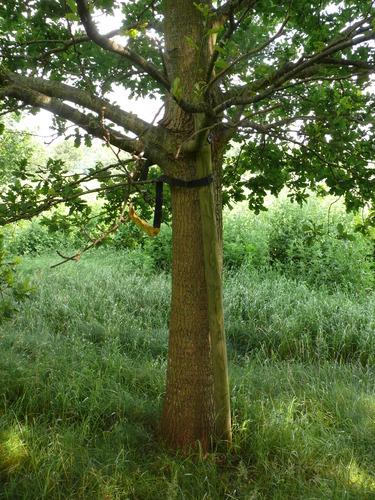 Kruishouten Lozer kruisdreef met opgaande eiken (10)