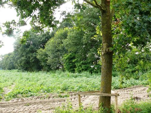 Kruishouten Lozer kruisdreef met opgaande eiken (7)