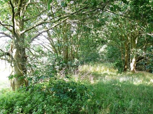Kruishouten Lozer kruisdreef met opgaande eiken (9)