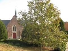 Okkernoot op Scheldedijk Vlassenbroek