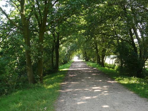 Laarne Dreven ten zuiden en ten westen van de kasteelsite (3)