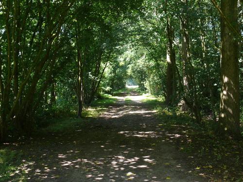 Laarne Dreven ten zuiden en ten westen van de kasteelsite (6)