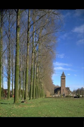 Evergem Doornzeledries bomenrijen en kerk
