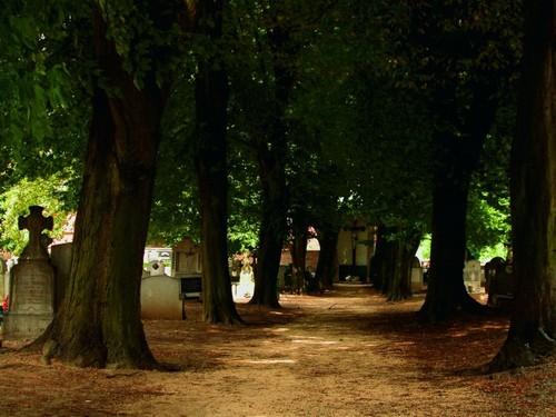 De stedelijke begraafplaats met de bomenlaan in het oudste deel.