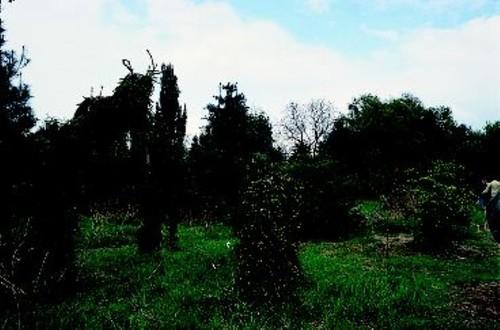 Het pinetum Jean Ickx.