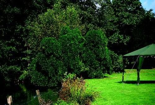 De treurhoningboom bij de vijver is de tweede dikste van België.