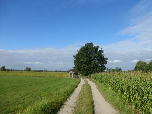 Zicht op veldkapel en hoekboom aan kruispunt voetwegen