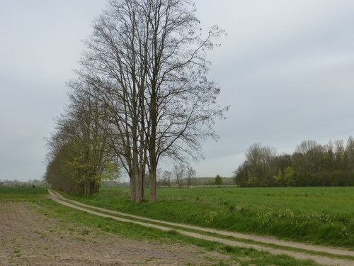 Onberharde weg en houtwal langs grasland