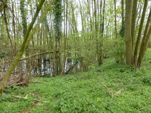Elzenbroekbos in het Warandebos