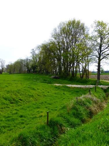 Microreliëf in grasland en houtwal met robinia