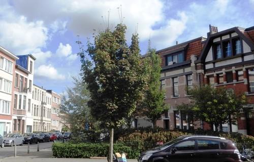 Antwerpen De Neufstraat straatbeeld
