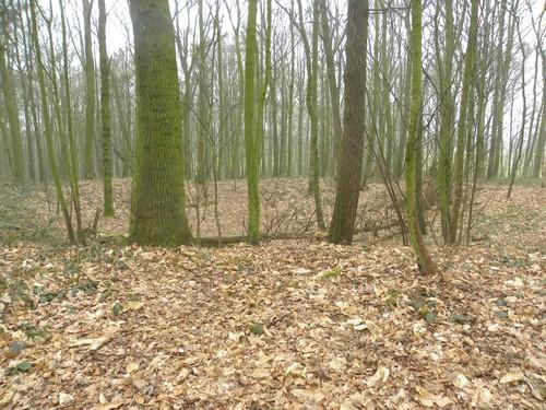 Sanctuary Wood, mijnkrater met bunker (Ieper-Zillebeke)