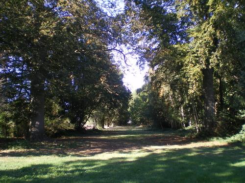 Evergem Wippelgem kasteelpark  zichtdreef met opgaande beuken (1)
