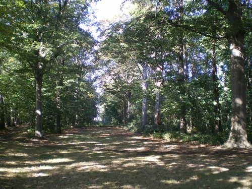 Evergem Wippelgem kasteelpark  zichtdreef met opgaande beuken (2)